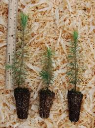 best 25 tree seedlings ideas on wedding favours bulk
