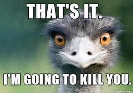 Ostrich Meme - crazed ostrich btg album on imgur