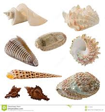assorted seashells assorted seashells stock photo image 37719150