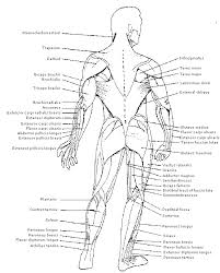 Picture Diagram Of The Human Body Human Anatomy Chart Page 67 Of 202 Pictures Of Human Anatomy Body