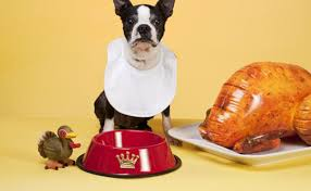 11 thanksgiving staples that are hazardous to pups barkpost