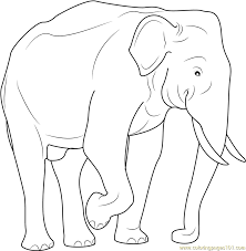 indian elephant coloring free elephant coloring pages