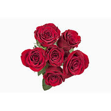Dozen Of Roses Grower2buyer Fresh Cut Flowers Half Dozen Roses 6 Stem Bunch