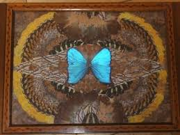 butterfly serving platter 45 best butterfly wing images on butterfly wings
