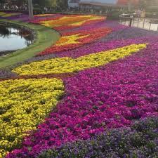 epcot flower and garden festival 880 photos u0026 81 reviews
