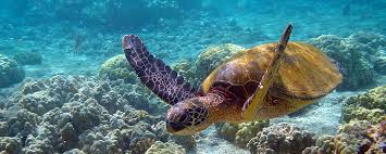 Hawaii the travelers images Travelers tourism consultancy services innovative tourism jpg