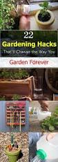 Urban Gardening Bangalore 388 Best Gardening Images On Pinterest Gardening Plants And