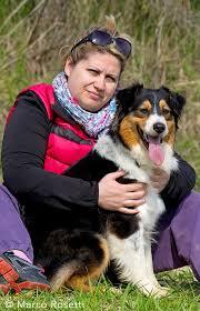 australian shepherd 3 mesi lady allevamento australian shepherd stronghold