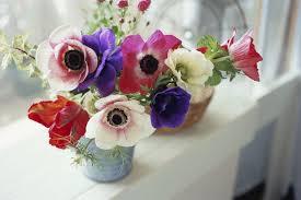 anemone flowers best anemone flower varieties