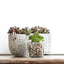 5 great ideas for succulent containers keeping with the times