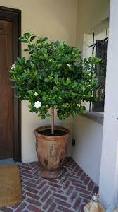 best 25 front door plants ideas on front door