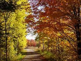 homestead michigan fall foliage tours 2