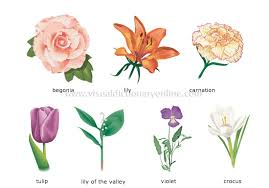 plants gardening plants flower examples of flowers 1