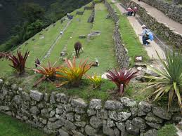 Family Garden Trains Machu Picchu Train Tours Peru Tours Killa Expeditions