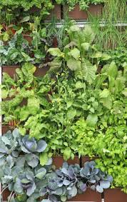 herb wall livewall the planted wall system designed in harmony with nature