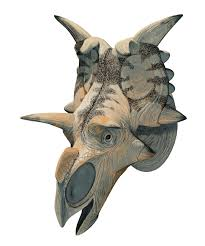 Dinosaur Head Wall Mount Xenoceratops Ceratopstid Cretaceous 恐竜 Pinterest