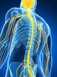 Human Anatomy Careers Career In Ultrasound Technology My Study Illinois