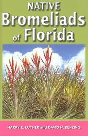 what plants are native to florida native bromeliads of florida harry e luther david h benzing
