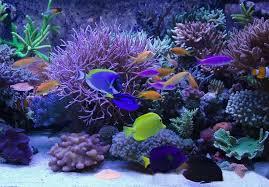 led reef aquarium lighting marine aquarium waterproof led marine aquarium light for sale