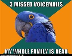 Paranoid Parrot Memes - i can has cheezburger paranoid parrot funny animals online