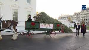 melania barron trump accept wisconsin tree for white house