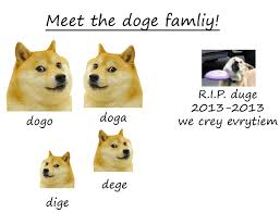 Lost Doge Meme - doge bodybuilding com forums