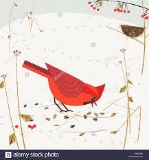 Cardinal Flag Cardinal Nest Stock Photos U0026 Cardinal Nest Stock Images Alamy