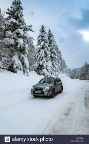 subaru winter subaru forester 4 x 4 on icy road with snow covered pine trees