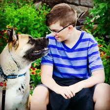 dog training canine professionals dog trainer directory iacp