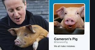 David Cameron Memes - piggate the internet reacts david cameron ribbed over claim he