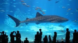 aquarium my trip to the aquarium or how imagination is lost through the