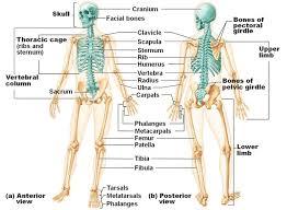Study Guide Anatomy And Physiology 1 25 Best Ideas About Karteikarten Online On Pinterest Geschichte