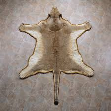 african lion rug mount 12331 the taxidermy store