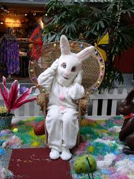 big easter bunny now easter bunny hops hula at lahaina cannery mall