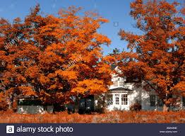 Haus E Siedlung Villa Haus Hause Orangenbäumen Herbst Altweibersommer