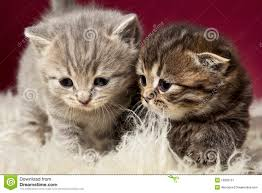 two cute kittens stock photo image of looking outside 20861044