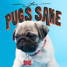 Birthday Pug Meme - pug puns that will brighten your day