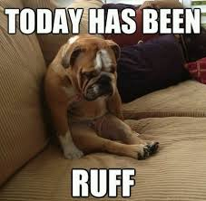 Having A Bad Day Meme - best dogs ever every dog has their bad day