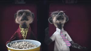 laughing meerkat movies compare the meerkat youtube