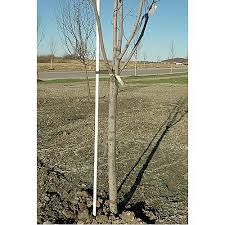 plant and tree supports fiberglass stake 3 4in x 8ft