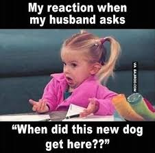 I Love My Husband Meme - my reaction when my husband asks when did this new dog get here