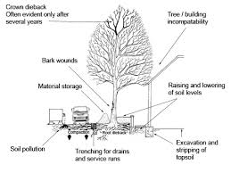 For A Tree Avoiding Tree Damage During Construction Morris Landscaping