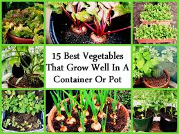 fall vegetable gardening in pots for beginners container