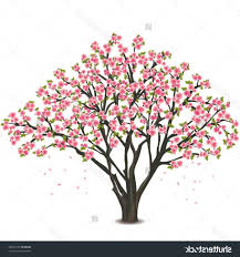 cherry blossom tree drawing at getdrawings com free for personal