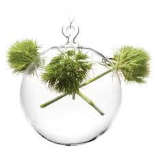 Plant Vase Hanging Glass Planters Hanging Glass Vases Chive Chive