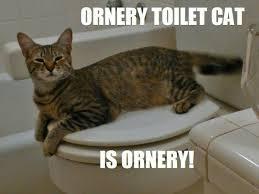 Meme Toilet - ornery toilet cat meme by therealcommissioner on deviantart
