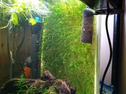 my diy java moss wall 127010