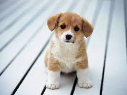 desktop cute dog pics to print download