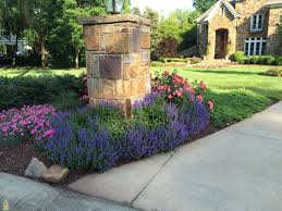 drift roses drift roses colors care and landscape ideas the planting tree