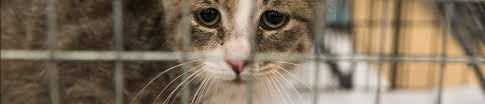 animal homelessness shelter intake and surrender aspca